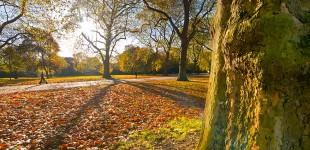 Autumnal Sun