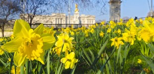Spring has Sprung in London
